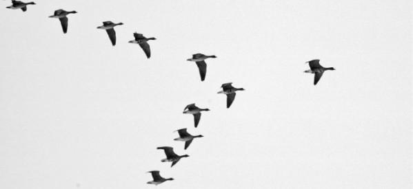 الاحتفال بمعجزة الحياة من خلال هجرة الطيور والسنة العالمية للمياه