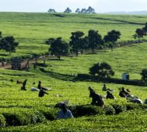 2014: السنة الدولية للزراعة الأسرية