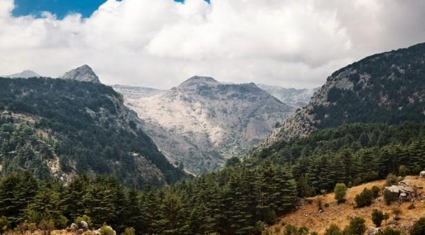 التجمع اللبناني لحماية البيئة يؤكد على ضرورة إقرار قانون المحميات الطبيعية