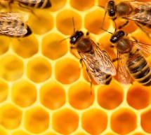 قطاع النحل مهدد بالمبيدات وقطع النباتات العطرية