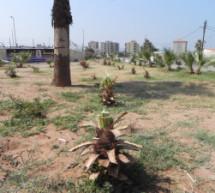 كشاف البيئة تستنكر التعدي على الطبيعة في الميناء