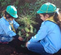 جمعية كشاف البيئة تحتفل بأسبوع الشجرة