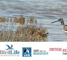 Small Grants: Call for Proposals – Mediterranean Basin Biodiversity Hotspot