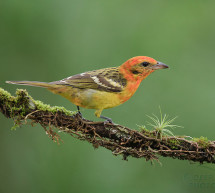 Climate Change Impacts Forests in Argentina: Birds Preyed on by Parasites