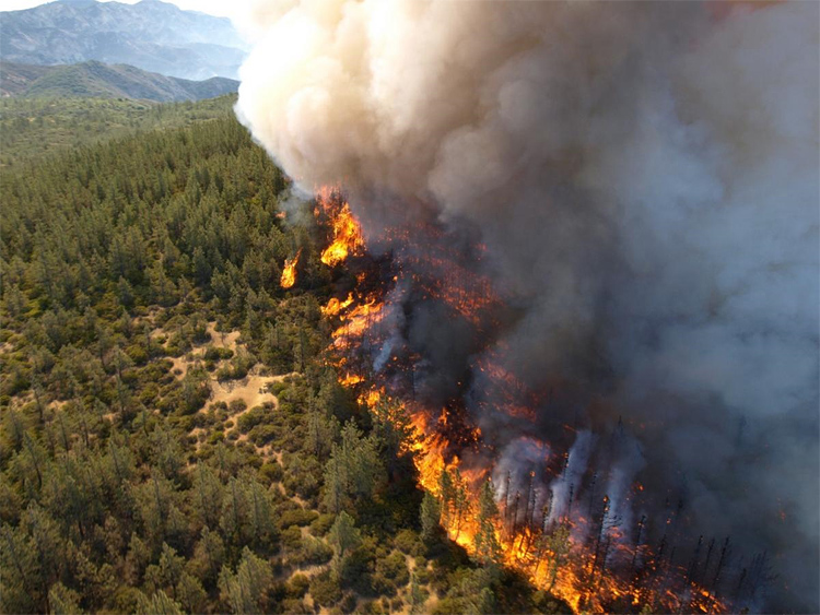 Global Federation National News Network! - Page 4 Forest_fire