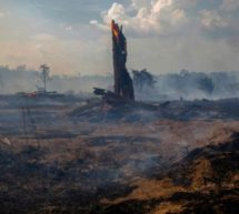 Deforested parts of Amazon 'emitting more CO2 than they absorb'
